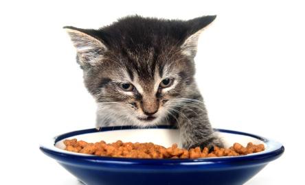 Хранене на малкото котенце