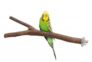 Хранене на птиците