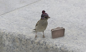 С птица на път!