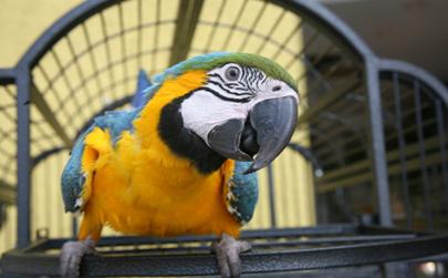 Няколко начина да предпазите птицата от опасностите в кухнята