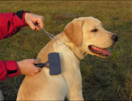 Груминг на кучета с гладка козина