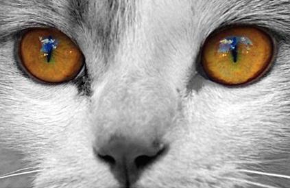Заболявания на очите на котките