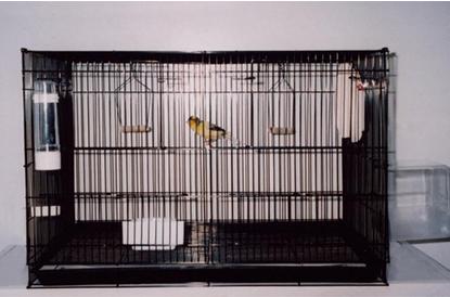 Избор на клетка за канарчетата