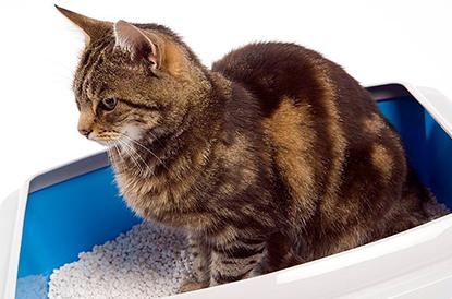 Как да научим котката да ползва котешка тоалетна