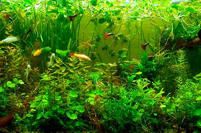 Растения в акваиума