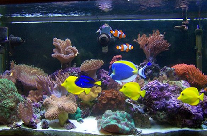 Соленоводен аквариум