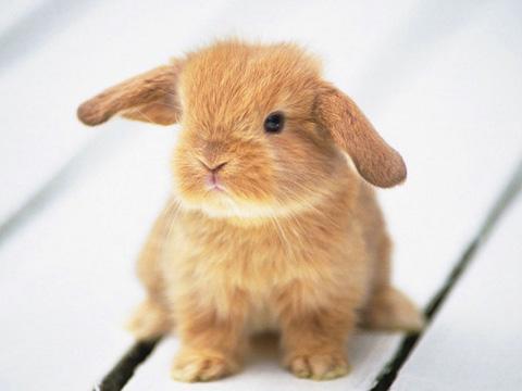 Сено за Зайците: Основа за здравословна диета