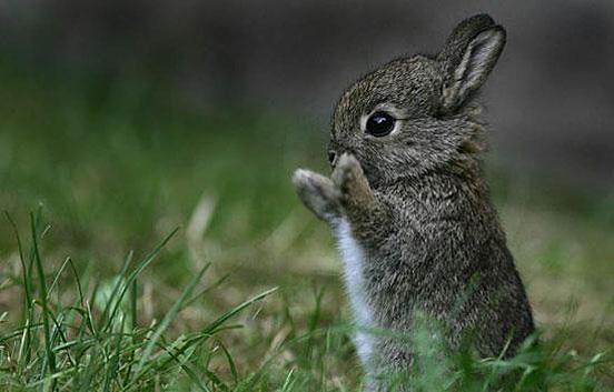 Груминг за зайчета