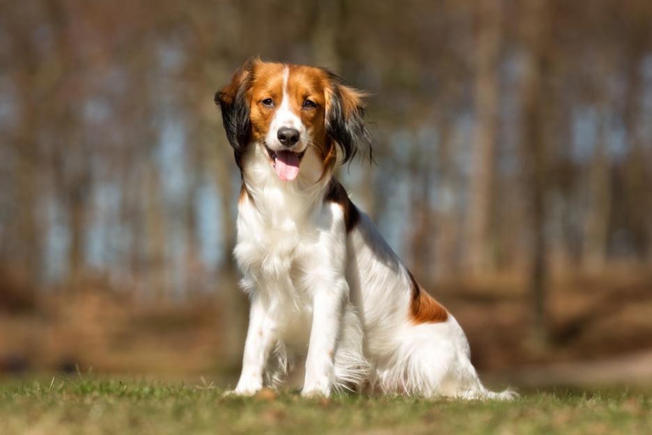 Наистина ли кучетата са далтонисти?