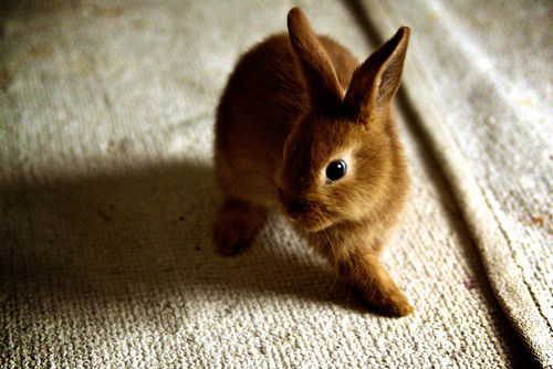 Топлинен удар на заек